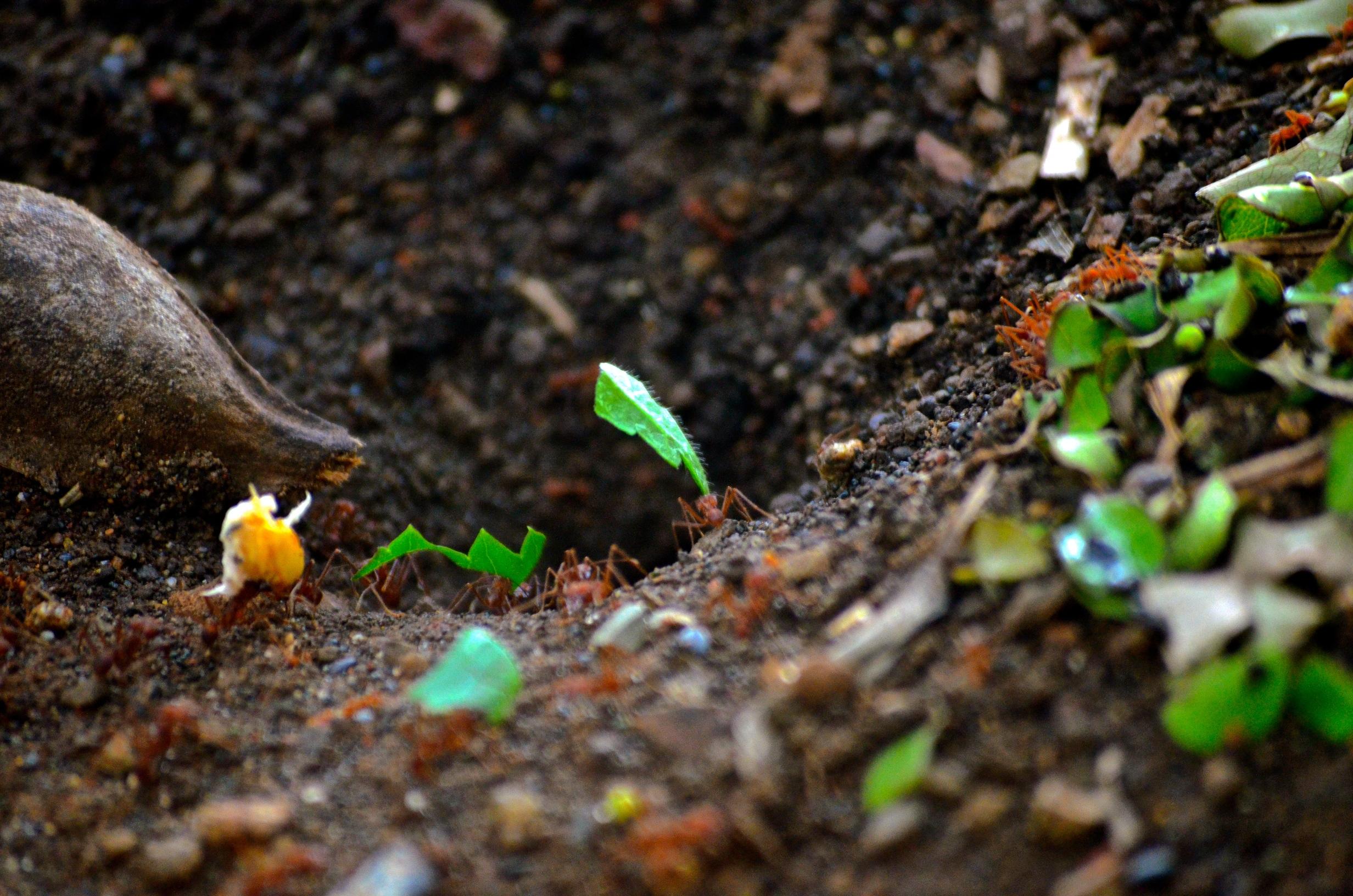 Accs l j venes destacan la importancia del suelo en im genes for 5 cuidados del suelo